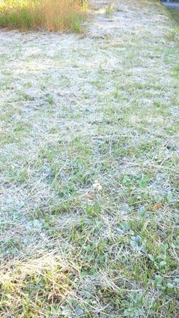 霜が降りた土曜日