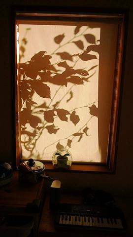 窓に映る影