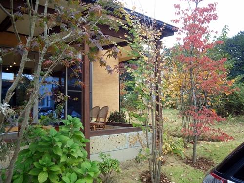 庭の紅葉2